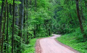 Road through a dark green forest - GlobePhotos - royalty free stock images