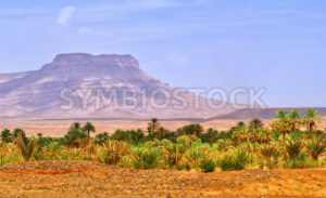 Date palms landscape in oasis in Draa Valley, Morocco - GlobePhotos - royalty free stock images