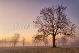 Foggy cold winter morning with tree silhouette - GlobePhotos - royalty free stock images