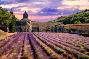 Lavender field in Senanque monastery, Provence, France - GlobePhotos - royalty free stock images