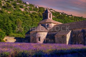Lavender fields in Senanque monastery, Provence, France - GlobePhotos - royalty free stock images