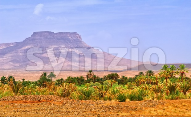 Date palms landscape in oasis in Draa Valley, Morocco Stock Photo
