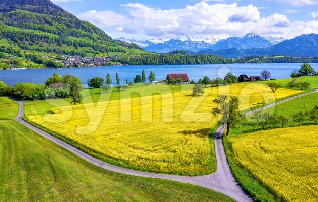 Blooming canola fields on Lake Lucerne, Switzerland Stock Photo