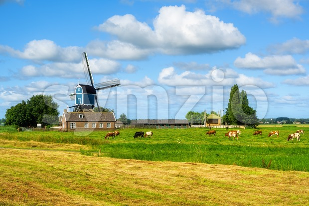 Dutch rural landscape with a windmill and cows, Holland, Netherlands Stock Photo