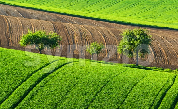 Green countryside landscape with trees, Germany Stock Photo