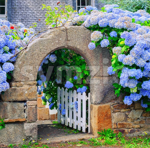 Blue flowers decorating a gate in Brittany, France Stock Photo
