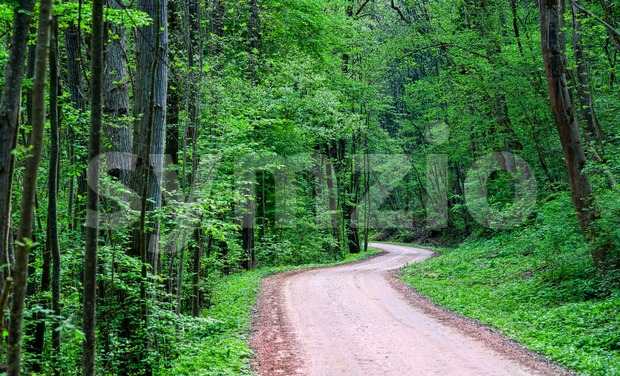 Road through a dark green forest Stock Photo