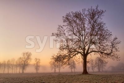 Foggy cold winter morning with tree silhouette Stock Photo