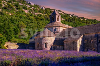 Lavender fields in Senanque monastery, Provence, France Stock Photo