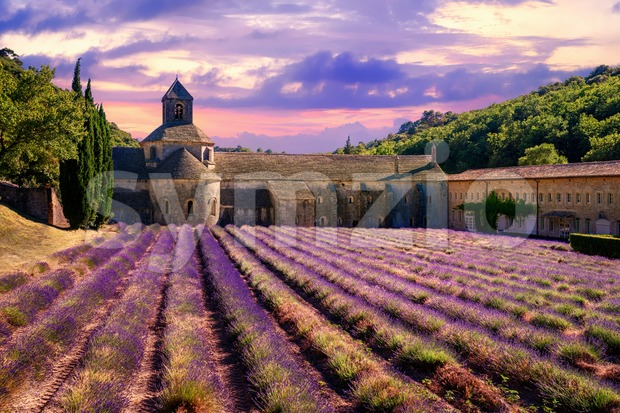 Blooming lavender field in Senanque monastery on dramatic sunset, Gordes, Provence, France