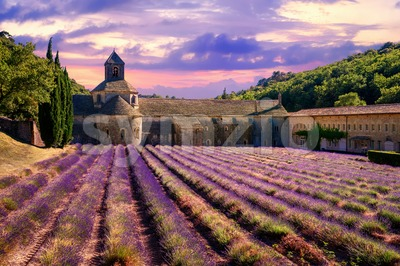 Lavender field in Senanque monastery, Provence, France Stock Photo