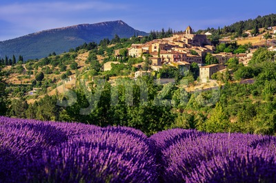 Aurel town and lavender fields in  Provence, France Stock Photo