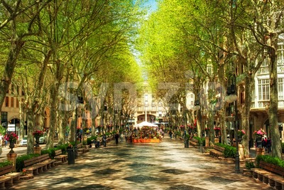 Boulevard Born in Palma de Mallorca, Spain, Europe Stock Photo
