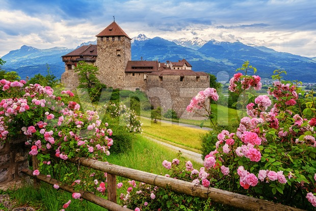 Vaduz castle, Liechtenstein, in the Alps mountains, with beautiful blooming pink rose flowers