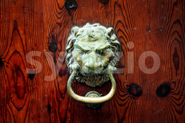 Decorative bronze lion head door knob on a dark wooden background