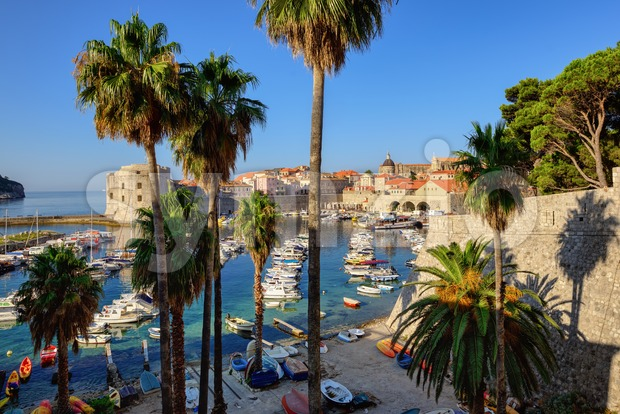 Dubrovnik, Croatia, palm trees in the old port Stock Photo