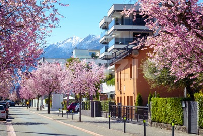 Blooming cherry trees in Ascona town, Switzerland Stock Photo