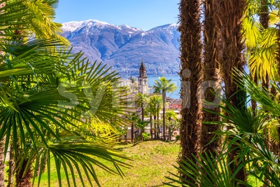 Palm tree garden in Ascona town on Lago Maggiore lake, Locarno, Switzerland Stock Photo